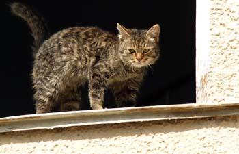 В Ташкенте ведется массовое уничтожение бездомных животных
