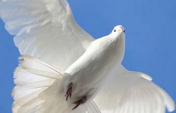 Делегации РФ и РТ приняли участие во Всемирном религиозном съезде за мир
