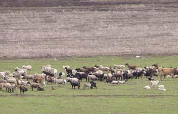 Климатологи ПРООН борются с засухой в Суусамырской долине Киргизии