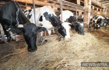 В Туркменистане домашний скот уничтожает неизвестная инфекция