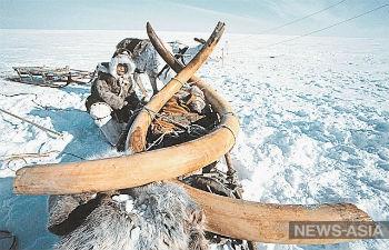 Якутия и Китай создадут единого оператора по переработке и экспорту бивней мамонта