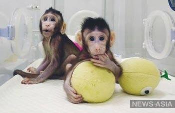 В Китае впервые клонировали обезьян, как овечку Долли