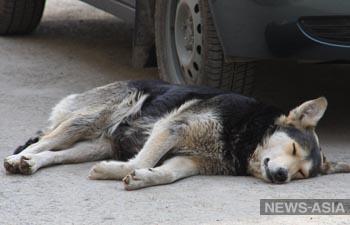 В Екатеринбурге стартовала акция по оказанию помощи бездомным собакам - «Дорога домой»