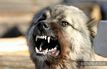 Опасный «кусь»: что делать и куда обратиться, если вас атаковала безнадзорная или бродячая собака?