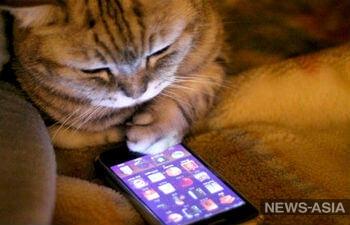 Цифровая безопасность для животных: электронный гаджет может нанести вред и питомцу, и владельцу