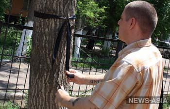 Казахстанские журналисты и общественники выступили против топпинга деревьев