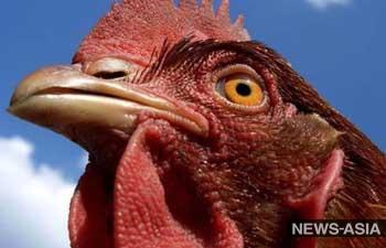 Израиль и Узбекистан построят птицефабрику