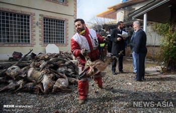 Граждан КР на борту рухнувшего в Иране Боинга не было