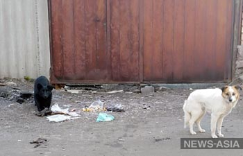 В муниципалитете Бишкека отказываются строить приют для бездомных животных