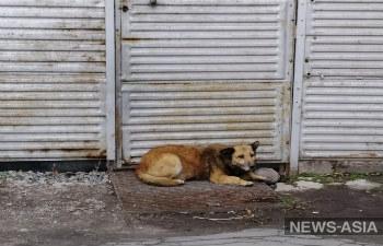 Зоозащитники Бишкека не смогли уговорить спикера БГК сократить отстрел животных в городе