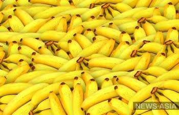 В Туркменистане собрали первый урожай бананов