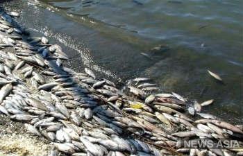 Руководство МВД РК взяло под контроль расследование экокатастрофы на реке Урал
