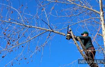 В Узбекистане значительно подняли штрафы за незаконную вырубку деревьев