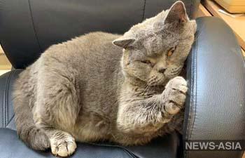 В Тюменской области полиция вернула владельцу похищенного кота