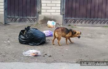Бишкекчан приглашают на общественное обсуждение новых правил содержания домашних животных и птиц