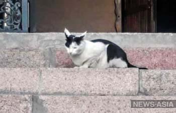 В Туркменистане запретили держать дома кошек и собак