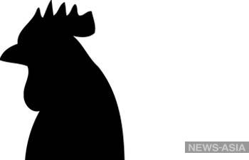 В Китай вслед за вспышкой коронавируса пришел птичий грипп