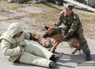 На всероссийских соревнованиях кинологов от жары умерли две собаки