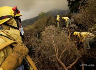 Лесные пожары: Медведев поручил МВД не допустить анархии
