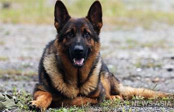 На востоке России на службу призвали караульных собак