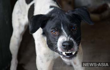 В Казахстане бродячие собаки загрызли шестилетнюю девочку