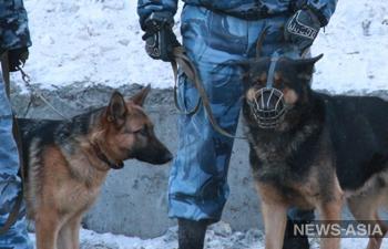 В России пьяненькая женщина украла на закуску 31 банку с огурцами у соседки