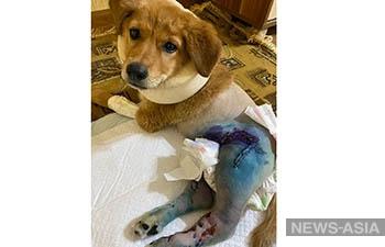 В Кыргызстане владельцу собаки грозит реальный срок за самооборону
