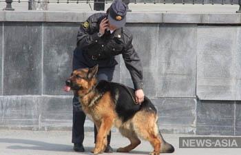 Силовики Кыргызстана и России изъяли более 810 кг героина