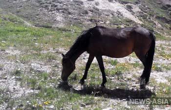 В Кыргызстане озаботились рациональным использованием пастбищ
