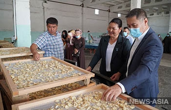Джалал-Абад увеличит экспорт чеснока в Узбекистан