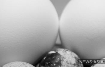 Найденные в Чечне яйца динозавров оказалась просто камнями