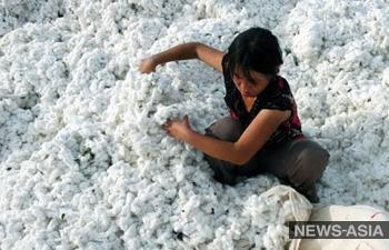 Правозащитники требуют прекратить финансирование эксплуатации детского труда в Узбекистане