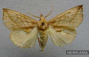 Екатеринбурженку искусала до неузнаваемости тропическая бабочка
