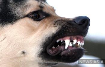 В Абакане собака отгрызла голову хозяйке-пенсионерке