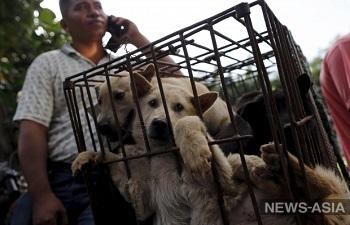Зоозащитники не смогли помешать проведению фестиваля собачьего мяса в Китае