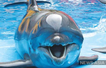 Дельфины, морской котик и кит-белуха на гастролях в Бишкеке