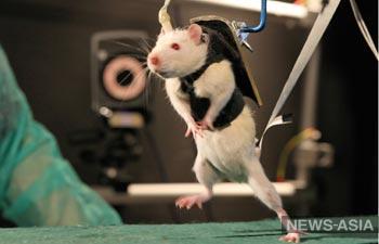 Первая пересадка головы в Китае у обезьян и крыс прошла успешно