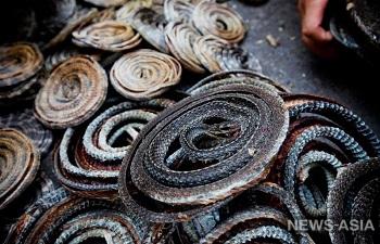 Гражданин Китая нелегально вёз в Киргизию сушёных змей и лягушек