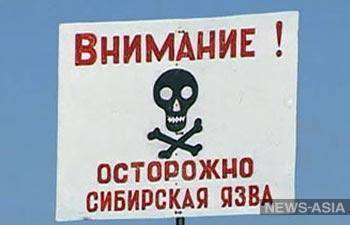 В Казахстане локализуется вспышка сибирской язвы