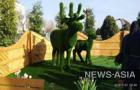 Необычный подарок в Бишкеке по инициативе мэра города Албека Ибраимова организовало МП «Бишкекзеленхоз» – на площади Победы теперь красуются оригинальные зеленые скульптуры топиарии в форме слона, медведя, верблюда, жирафов и других животных.